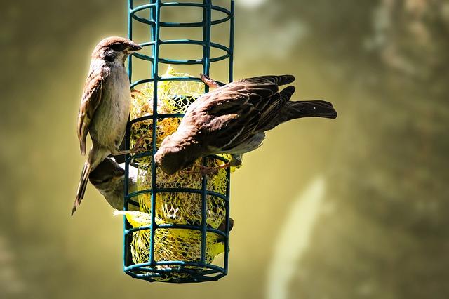 Přikrmování ptáků v zimě