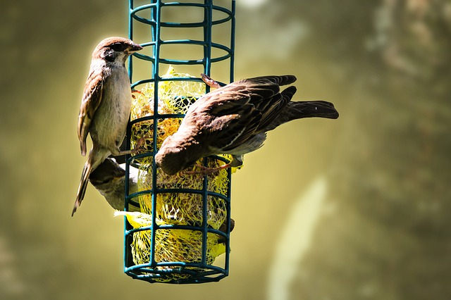vrabci u krmítka