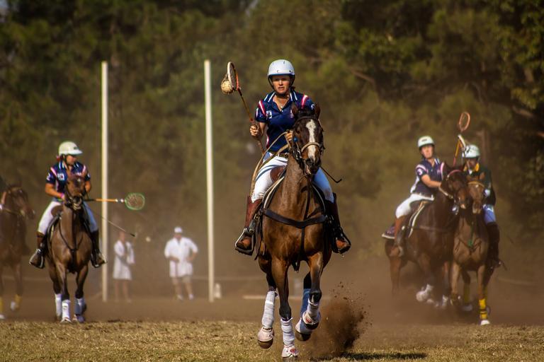 Kůň jako hráč