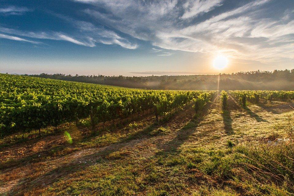 Ubytování ve vinařské oblasti